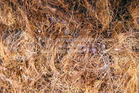 Palm Fiber Charcoal